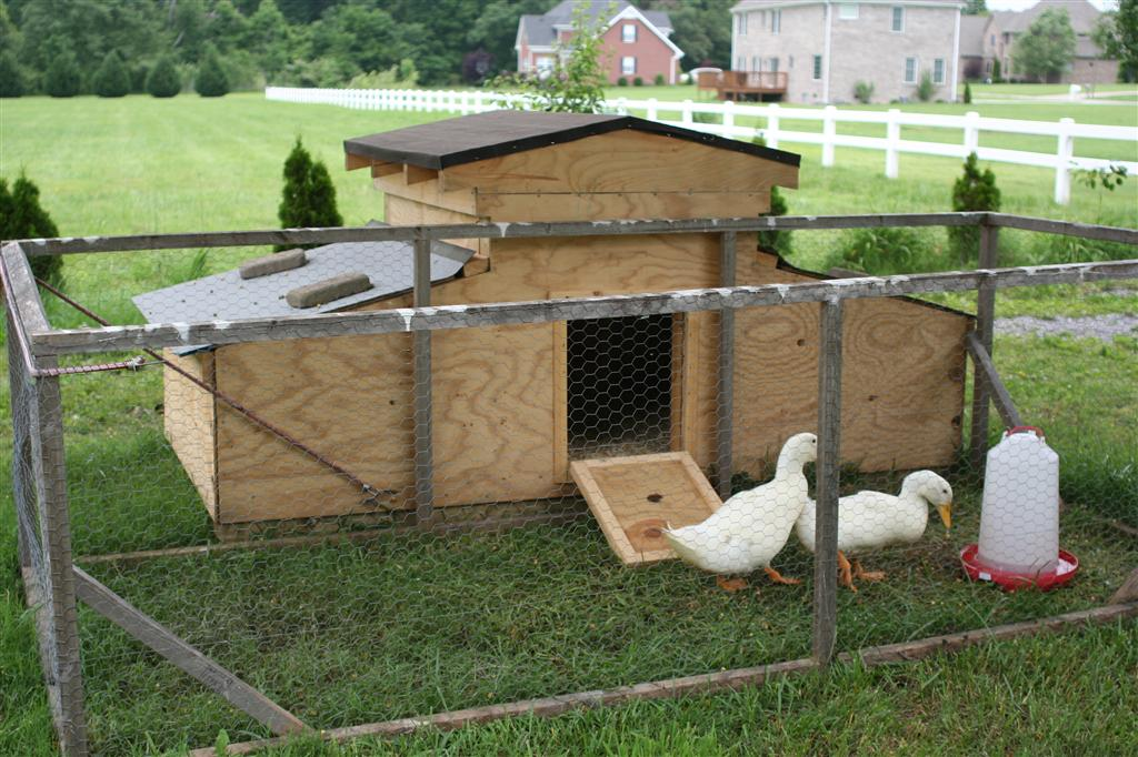 Hobby farm ideas on pinterest chicken breeds chicken for Build your own duck house